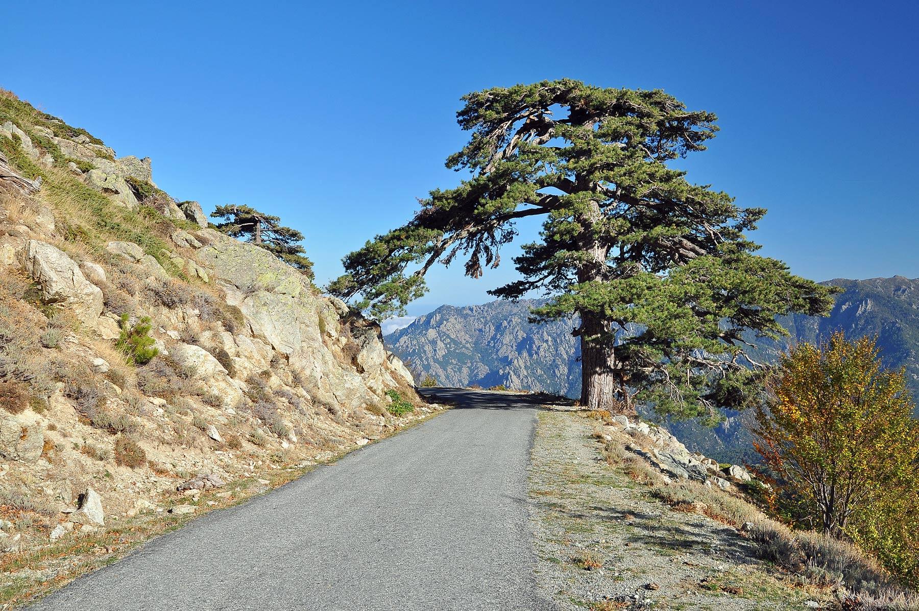 Corsica-Cycling-Holiday-Eat-Sleep-Cycle